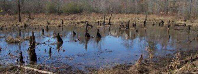 Stimulus Swamp