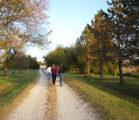 Walking Where You Live
