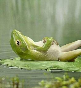 frog_mr