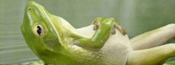 Pharaoh. Forrest Gump. Frogs.