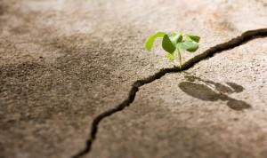 plant-growing-through-crack-in-concrete