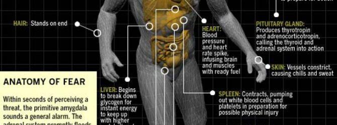 Anatomy of #FEAR