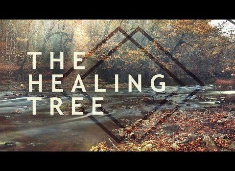 """""""The Healing Tree"""" with Jentezen Franklin"""