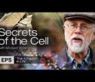 Biochemist and bestselling author Michael Behe explores the key missing…