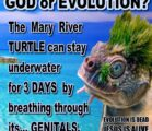 GOD or EVOLUTION… (Ain't NO way this turtle evolved by…