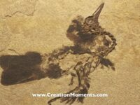 """ANOTHER… """"EVOLUTION CRUSHER"""" Let the real fossils records show!! Visit…"""