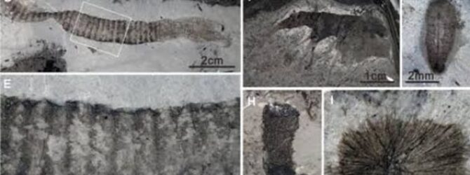 Cambrian Fossil The last layers of fossils on the earth's…