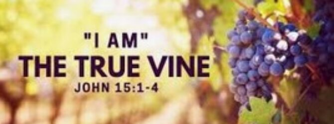"**""I am the True Vine""**(John 15:1) is the last of…"