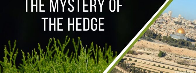 The Mystery of The Hedge | Episode 903