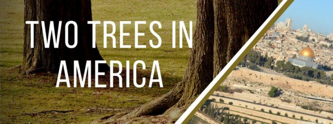 Two Trees in America | Episode 906